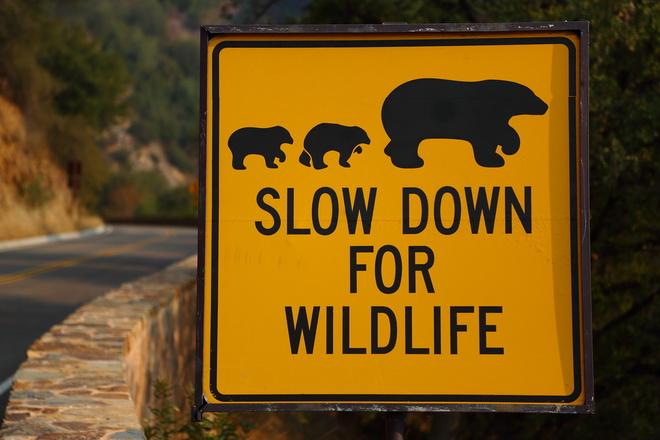 Дорожный знак в национальном парке Секвойя
